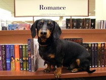 crusoe-celebrity-dachshund 4